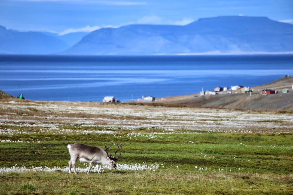 Spitsbergen, Idziemy Dalej w 2017