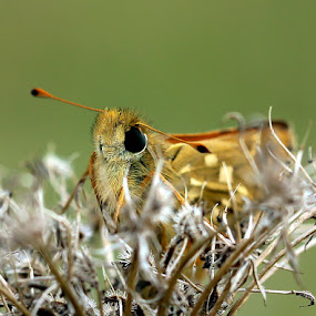eye to eye by Anže Papler - Animals Insects & Spiders