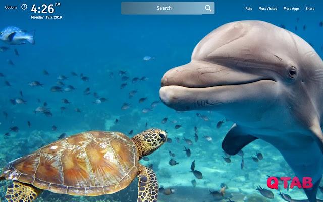 Sea Turtle Wallpapers Sea Turtles New Tab