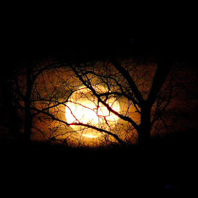 Moon Glow by Carol Milne - Landscapes Starscapes