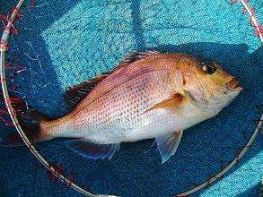 Photo: 戸田さんも釣ってました。