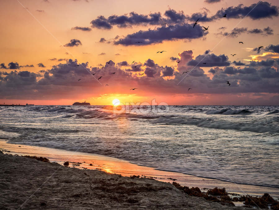 Sunrise Galveston Beach by Ellen Yeates - Landscapes Sunsets & Sunrises ( time of day, relax, ship, texas, ocean, beach, landscape, usa, cruise, photography, sun, horizontal line, sky, galveston bay, cloudy, trip, galveston, animal, water, pigeon, sand, orange, ellen yeates, horizon, enjoy, fun, morning, orange sky, early morning, soaring, bird, picture, vacation, bay, fly, horizontal, outdoor, galveston beach, wave, summer, cloud, air, sunrise, soar )