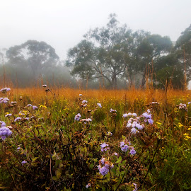 Weeds In Fog by Geoffrey Wols - Flowers Flowers in the Wild ( flowers, field, grass, yellow, cry, trees, fog,  )