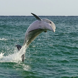Hello by Jeni Toll - Animals Other ( sea creatures, nature, dolphins, wildlife )