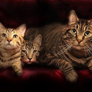 threecats.jpg