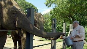An Elephant's Trust thumbnail