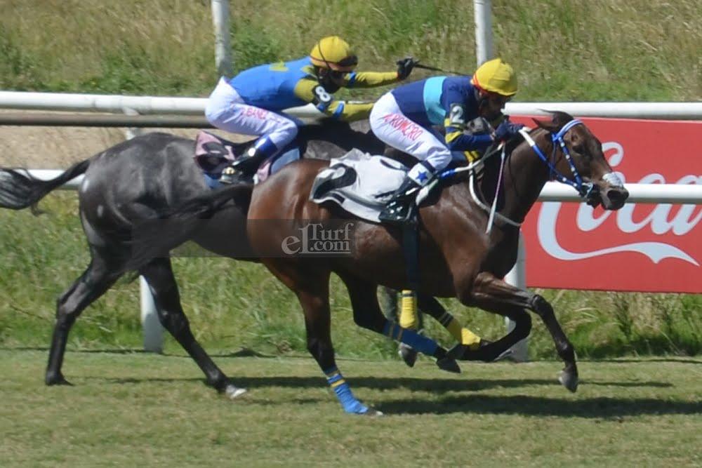 Karmelle (Awzaan) gana Condicional (1500m-Pasto-MAR). - Staff ElTurf.com