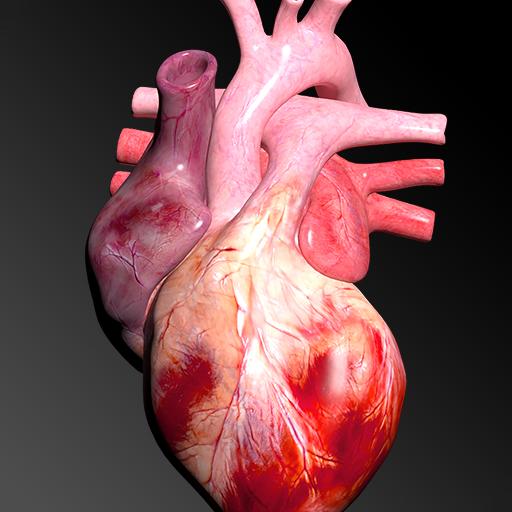 Baixar Sistema Circulatório em 3D (Anatomia) para Android