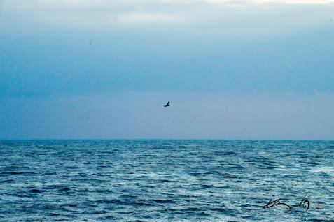 太平洋の海。。。