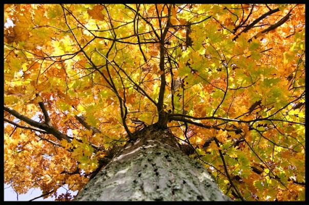 I rossi d'autunno di momoronf