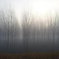 Fog di