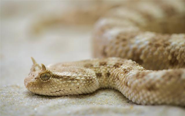 Snake Themes & New Tab