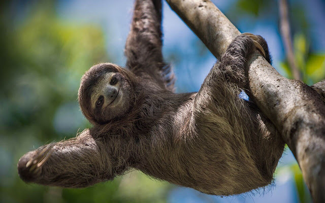 Sloth - New Tab in HD