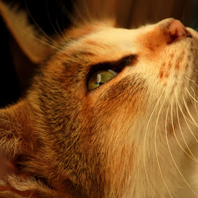 The pretty pet by Kisor Mukhopadhyay - Animals - Cats Portraits