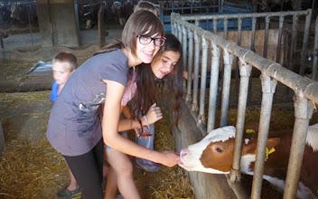 Photo: Visita alla stalla di Venante