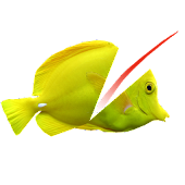 Swipe To Cut Swimming Fish