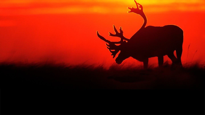 Watch Mark Emery's American Wildlife live