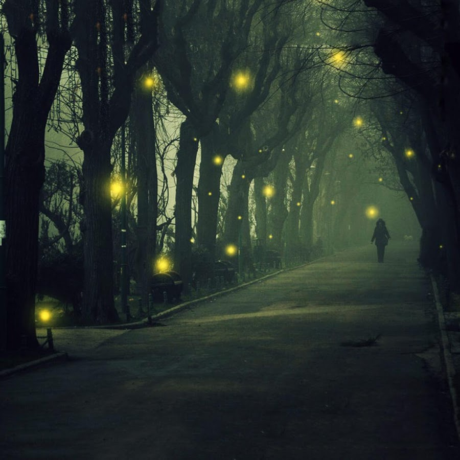 Fireflies Live Wallpaper - Android Apps on Google Play for Firefly Insect Wallpaper  165jwn