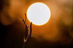 ...e la mantide accarezzò il sole ed egli non si sentì più solo