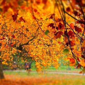 Kew Gardens in Autumn, London by Steve Cooke - City,  Street & Park  City Parks (  )