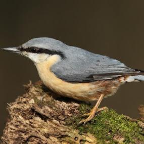 www.birdmad.com by Dean Eades - Uncategorized All Uncategorized