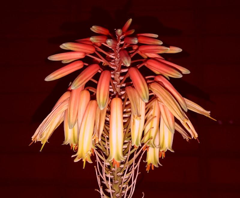 Fleur di Giuseppe Nicosia