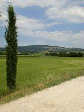 Photo: Cipresso strada bianca agriturismo girasole