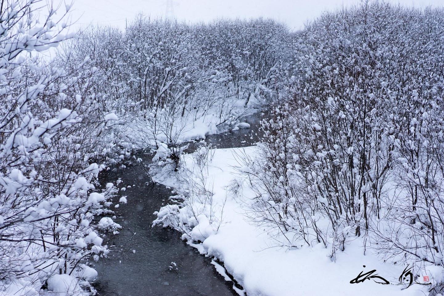 川辺の樹木@北竜町碧水地区
