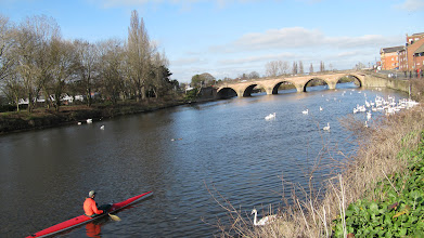 Photo: Kayaker stops to let swans go by on the River Severn