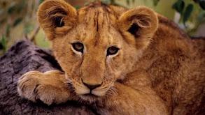 Kenya: Masai Mara and El Karama thumbnail