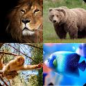 أحزر الحيوان icon
