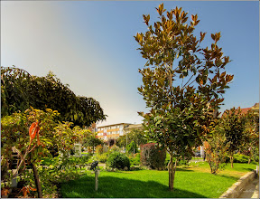 Photo: Turda, Piata 1 Decembrie 1918, spatiu verde, magnolia grandiflora  - 2019.09.16