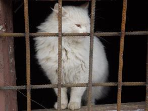 Photo: Від чуми та тюрми - ??? !!!