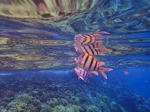 Photo: Fish.