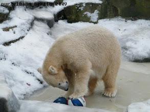 Photo: Fuer welchen Ball soll Knut sich nur entscheiden ?