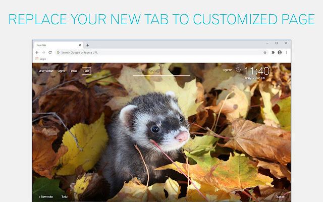 Ferret Wallpaper HD Ferrets New Tab