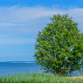 Tree at the Baltic Sea by Maksim Kozlov - Landscapes Waterscapes ( colorful, green, horizon, landscape, coastline, contrast, holiday, idyll, baltic sea, nature, blue, background, foreground, copy,  )