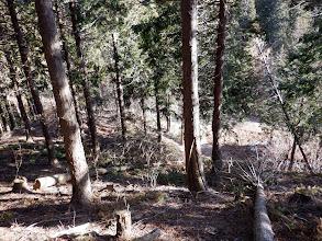 下に林道が見えてくる