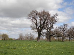 Photo: Dandelions on the meadow