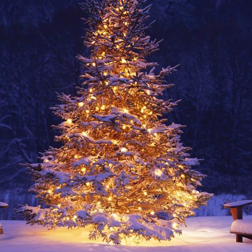 Baixar Christmas Tree Wallpapers para Android