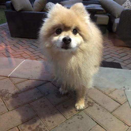 Do you know my owner?, FOUND Nov 27, 2019