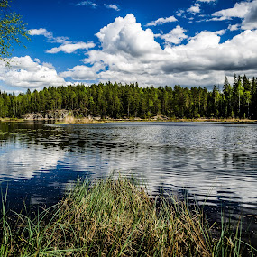 Nuuksion National park by Nico Sinselmeijer - Landscapes Forests ( water, national park, forrest, park, tree, sunny, trees, finland, lake, nuuksion, hiking, sun )