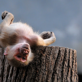 Lazy by Aris Setiarso - Animals Other Mammals