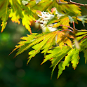 hd autumn wallpapers icon