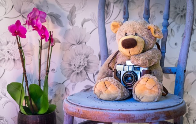 Teddy Bear, Camera, Orchids, Scene, Chair, Chalk Paint