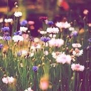 К чему снится поле цветов?