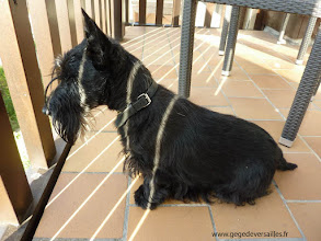 Photo: Samson au Mercure Deauville Hotel du Yacht Club