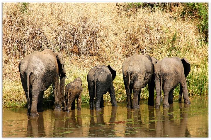 Saluti dalla Tanzania di SLOWSNAKE80