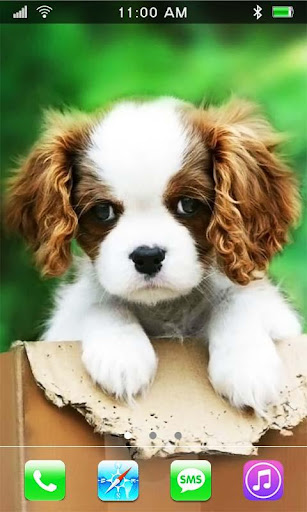 Small Doggy Spaniel