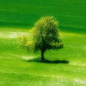PIXperia Theme-Shades of Green